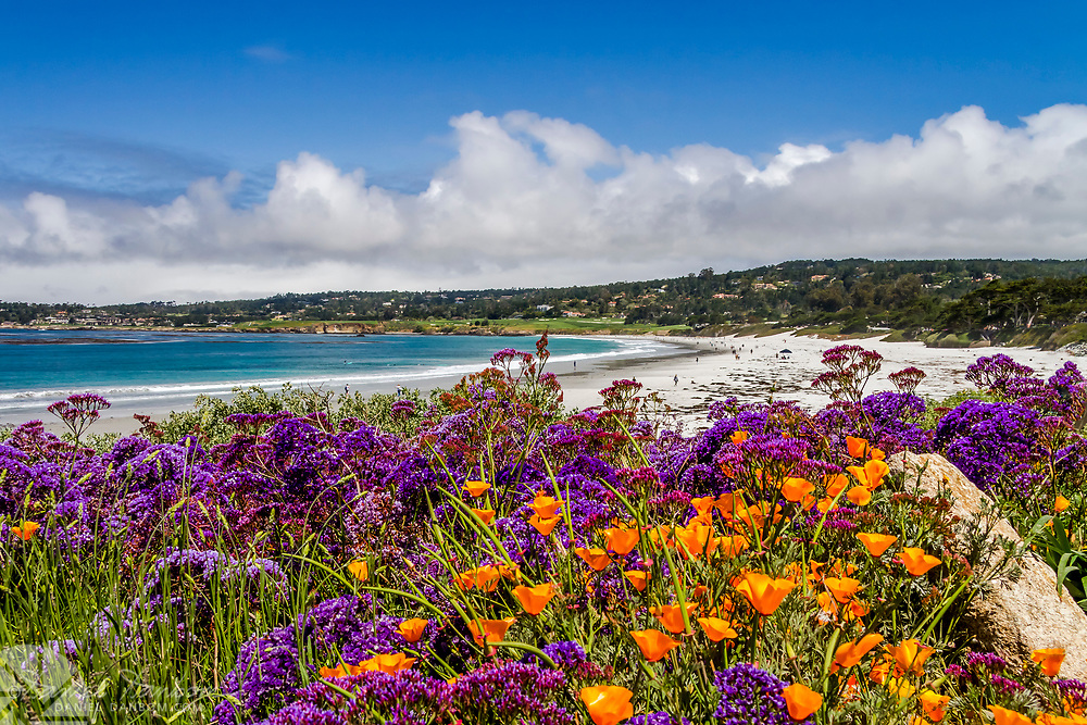 Carmel by the Sea with poppies and purple flowers, looking towards, Pebble Beach and Ocean Avenue beach area, California, highway 1.