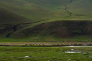 Sheep grazing, Bayanbulagu Gatcha, grassland steppe, Inner Mongolia, China
