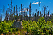 Glacia erratic rock at edge of burn. Boreal forest.<br />Val d'Or<br />Quebec<br />Canada