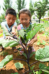 June 16, 2017 - Weifan, Weifan, China - Pupils experience farming work at a mini farm in Weifang, east China's Shandong Province, June 16th,2017. (Credit Image: © SIPA Asia via ZUMA Wire)