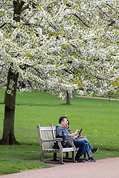 © Licensed to London News Pictures. 16/04/2018. London, UK. A couple chat in the sunshine, under a tree in full blossom, as the UK is set to experience warm weather of up to 25 degrees celsius this week. Photo credit : Tom Nicholson/LNP