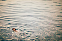 Neriamangalam, India -- February 17, 2018: A young boy swimming in the Periyar River.