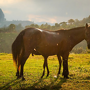 mare and foal in Guatape