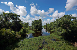 04 June 2014. Jean Lafitte National Historic Park, Louisiana.<br /> Clogged waterways in the swamp at the Barataria Preserve wetlands south or New Orleans.<br /> Charlie Varley/varleypix.com