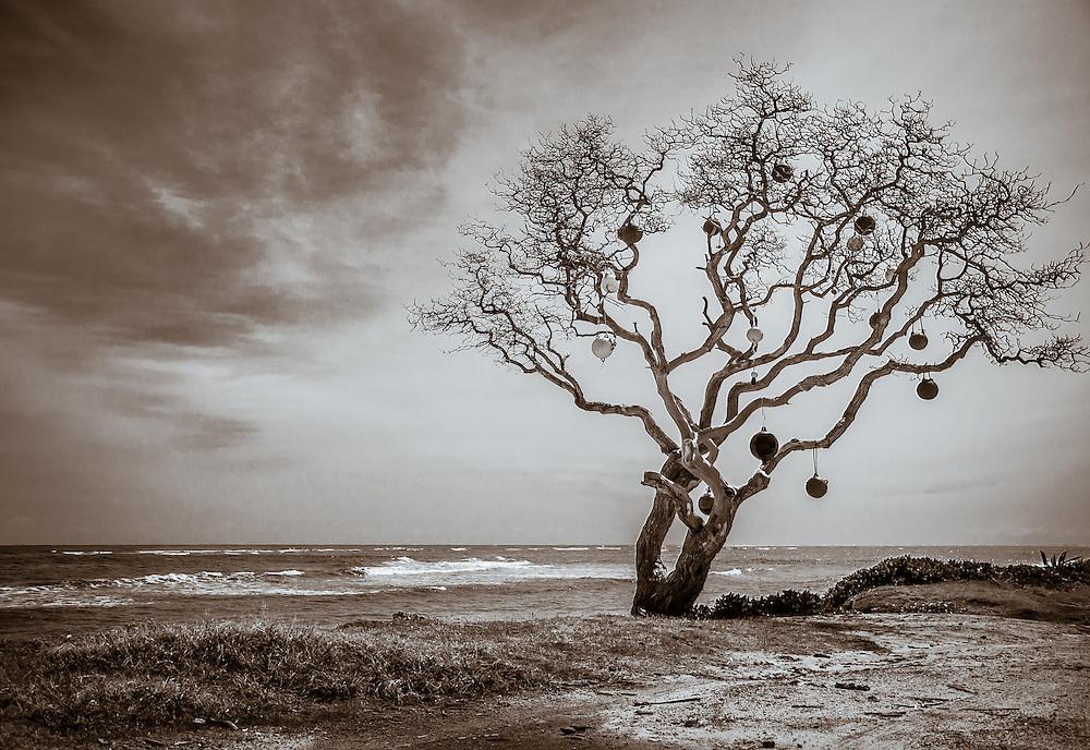 Bouy Tree II