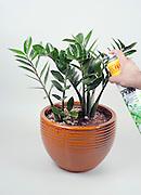 hand sprays a houseplant