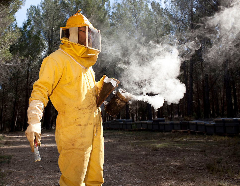 February, 26th, 2010. A beekeeper collects the honey from the hives in the town of Jerica in the community of Castellon de la Plana, Spain.