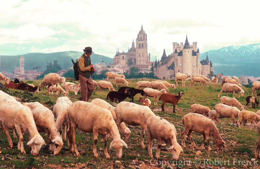 SPAIN, CASTILE and LEON, SEGOVIA the Cathedral, Alcazar Palace and city skyline with a shepherd and his flock of sheep in the foreground