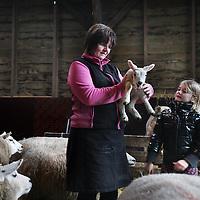 Nederland, Zunderdorp , 3 maart 2014<br /> Boerin Angela houdt 1 van de eerste nieuw geboren lammetjes vast op boerderdij de Stadshoeve.<br /> julia (7) wil haar ook heel graag vasthouden.<br /> Foto:Jean-Pierre Jans