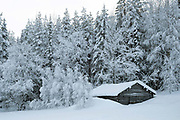 A wooden hut in the snowy Winter landscape of the forest on the edge of Immeljarvi lake on 18th February 2020 near Levi in Finnish Lapland. Levi is a winter sports paradise with 43 ski slopes, 230 km of cross-country ski trails, 20km of Winter hiking routes and 886 km of snowmobile trails.