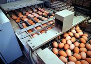 Putten, 16-11-1998.Eierinpakmachine bij legbatterij. 30.000 eieren per dag passeren deze machine die de eieren netjes met de punt naar boven in een pallet laat zakken..Foto: (c) Michiel Wijnbergh/Hollandse Hoogte