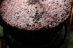 Questo è ciò che rimane dopo la spremitura dell'uva; quest'ultima, dopo esser stata messa nella tinozza e spremuta, assume la forma della tinozza stessa; ciò che ne rimane sono degli acini schiacciati che molto spesso venivano riutilizzati per realizzare l'acqua-vite.