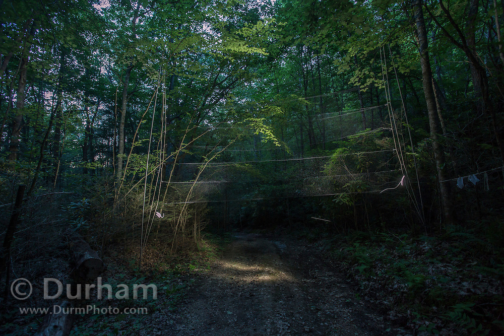 Mist nets being deployed over a road at night for a project to study Indiana bats in the Cherokee National Forest, Tennessee.