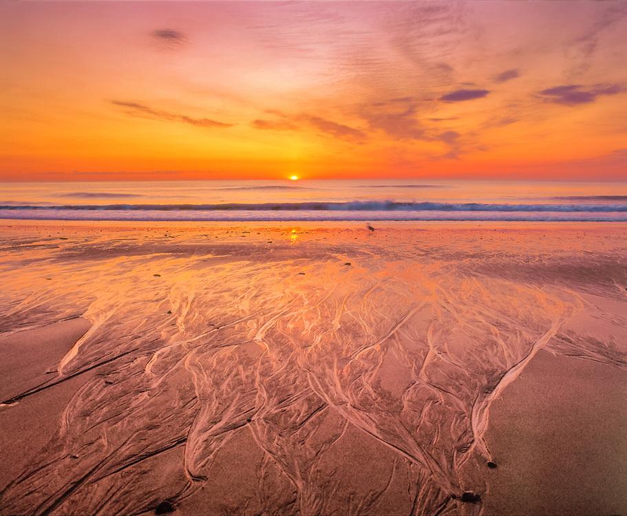 Sunrise, Coast Guard Beach, waves, shorebird & sand patterns, Cape Cod National Seashore, MA