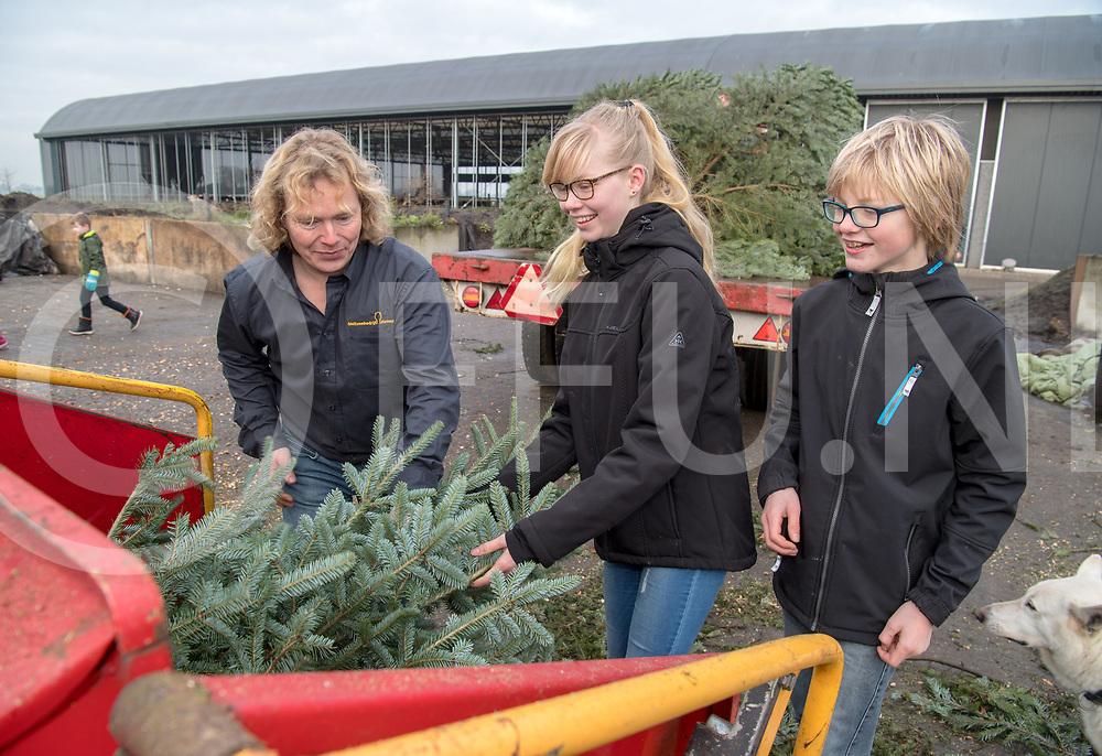 VINKENBUURT - BED VAN KERSTBOMEN SNIPPERS.<br /> Foto: Jim (r) en Lisa Schuttert (m) brengen op de fiets een kerstboom bij Pieter Koonstra. (l)<br /> Samen met Pieter Koonstra stoppen zij de boom in de versnipperraar.<br /> FFU PRESS AGENCY COPYRIGHT FRANK UIJLENBROEK