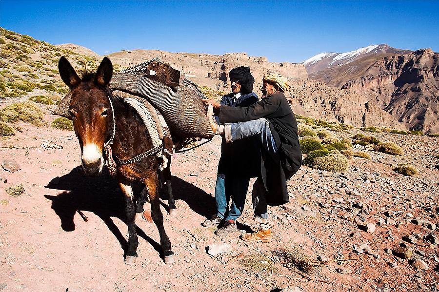 Berber men cinch down an imbalanced mule load on Tizi n'Rougoult Pass, M'Goun Massif, Central High Atlas, Morocco on November 4, 2007.