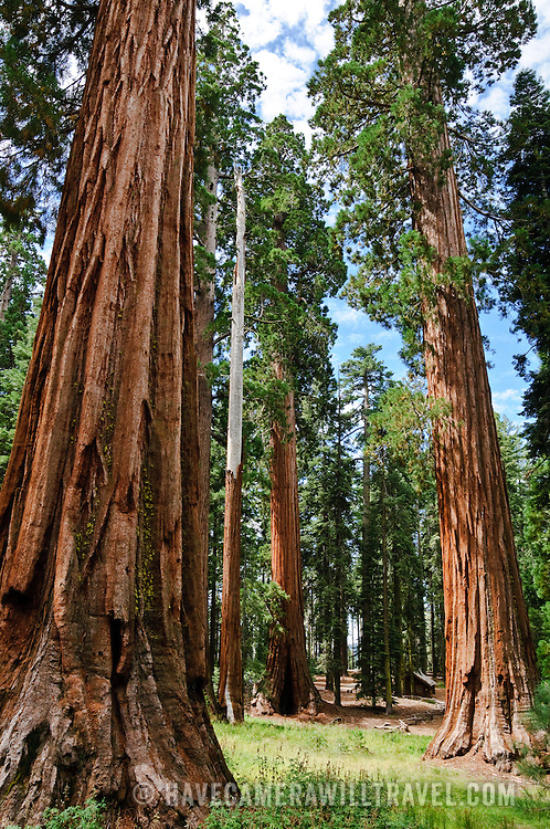 Mariposa Grove, Yosemite National Park