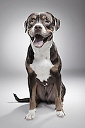 """EXCLUSIVE<br /> How A Dog Shelter Became A Talent Agency<br /> <br /> <br /> In general, people tend to have a negative opinion about dog shelters, for various reasons. When it comes to getting a dog, they usually prefer a purebred breeder or a pet store instead of adopting one. This leads to overcrowded shelters, which are constantly fighting for funding.<br /> Knowing they can't rely on people's voluntary donations alone, K9Friends decided to let their most important assets earn these donations in style, by starring in commercials. The Dubai-based dog shelter became a canine talent agency, where each dog available for casting has its own professional look book, Andrei Daniluc from the shelter said  """"So far they have been picked for print ads. They appeared in Viva Magazine, posed for Freedom Pizza posters, Pets Delight dog food, etc. But the campaign aimed to bring visibility to the shelter. You can foster a dog for a couple of weeks, take it for the weekend so they are like a part time companion you can benefit from in exchange for a donation. People can also adopt, of course, which was our ultimate goal :) So most of these dogs are already part of loving families.""""<br /> <br /> Photo shows: Oliver<br /> DATE OF BIRTH: FEBRUARY 2014<br /> GENDER:MALE<br /> SIZE:LARGE<br /> ©K9 Friends/Saatchi&Saatchi/Exclusivepix Media"""