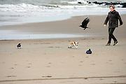 Een vrouw loopt met haar hond, die vogels opjaagt, langs het Zuiderstrand in Kijkduin