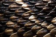 Keeled Scale Detail<br /> Eastern Diamondback Rattlesnake (Crotalus adamanteus)<br /> CAPTIVE<br /> The Orianne Indigo Snake Preserve<br /> Telfair County. Georgia<br /> USA<br /> RANGE: Southern United States