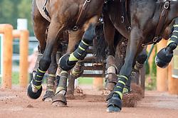 Christoph Sandmann, (GER), Amico 34, Asztor, Scicco, Variant, Wierd - Driving Marathon - Alltech FEI World Equestrian Games™ 2014 - Normandy, France.<br /> © Hippo Foto Team - Jon Stroud<br /> 06/09/2014