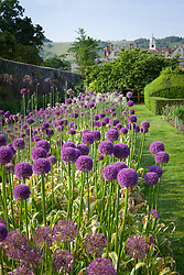 The allium festival bulb trial at Parham House and Gardens, West Sussex