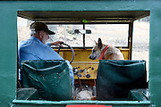"""Leo """"Joe"""" LaDouceur climbs into his 1947 Willys Jeep with his Australian Heeler Tasha to drive to a pasture on his 200 acres in Barnard, Vt. Friday, November 6, 2015. LaDouceur feeds his beef cows on grass and hay only, rotating them to new pastures every couple days for fresh feed and to minimize impact on the land.  (Valley News - James M. Patterson)<br /> Copyright © Valley News. May not be reprinted or used online without permission. Send requests to permission@vnews.com."""