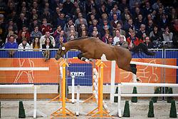 023 - Giovanni H<br /> KWPN Stallion Selection - 's Hertogenbosch 2014<br /> © Dirk Caremans
