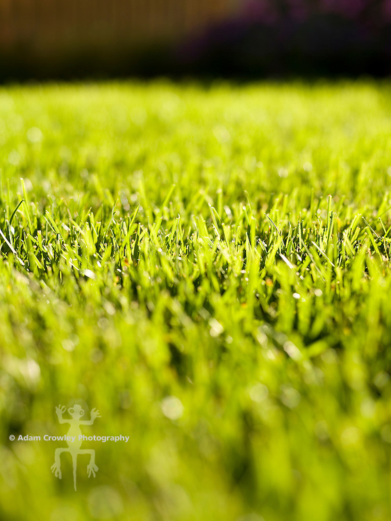 close up of grass, lawn