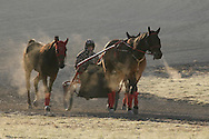 Town of Wallkill, New York - A trainer and three harness racing horses move away from the track after working out on a cold morning at the Mark Ford Training Center on Dec. 12, 2011.