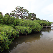 Mangroves in the water along the Lemon Bay/Myakka Scenic Trail in Englewood, Florida. (AP Photo/Alex Menendez) Florida scenic highway photos from the State of Florida. Florida scenic images of the Sunshine State.