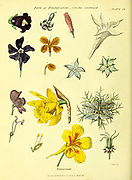 Parts of Fructification Corolla (Nectarium) from Vol 1 of the book The universal herbal : or botanical, medical and agricultural dictionary : containing an account of all known plants in the world, arranged according to the Linnean system. Specifying the uses to which they are or may be applied By Thomas Green,  Published in 1816 by Nuttall, Fisher & Co. in Liverpool and Printed at the Caxton Press by H. Fisher