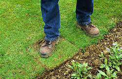 Repairing a damaged lawn edge<br /> Turning round and firming with  foot