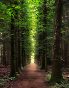 """Light at the End of the Tunnel - Plateau trail in Cuyahoga Valley National Park<br /> <br /> Available sizes:<br /> 11"""" x 14"""" print <br /> 11"""" x 14"""" canvas gallery wrap<br /> <br /> See Pricing page for details. <br /> <br /> Please contact me for custom sizes and print options including canvas wraps, metal prints, assorted paper options, etc. <br /> <br /> I enjoy working with buyers to help them with all their home and commercial wall art needs."""