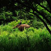 Thai Elephant Conservation Center, Chiang Mai