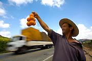 Matipo_MG, Brazil.<br /> <br /> Na foto, o vendedor de mexericas Ladario Ferreira Pires na rodovia BR 262 em Matipo, Minas Gerais.<br /> <br /> Ugli fruit seller, Larido Ferreira, in the higway BR 262 in Matipo, Minas Gerais.<br /> <br /> Foto: LEO DRUMOND / NITRO