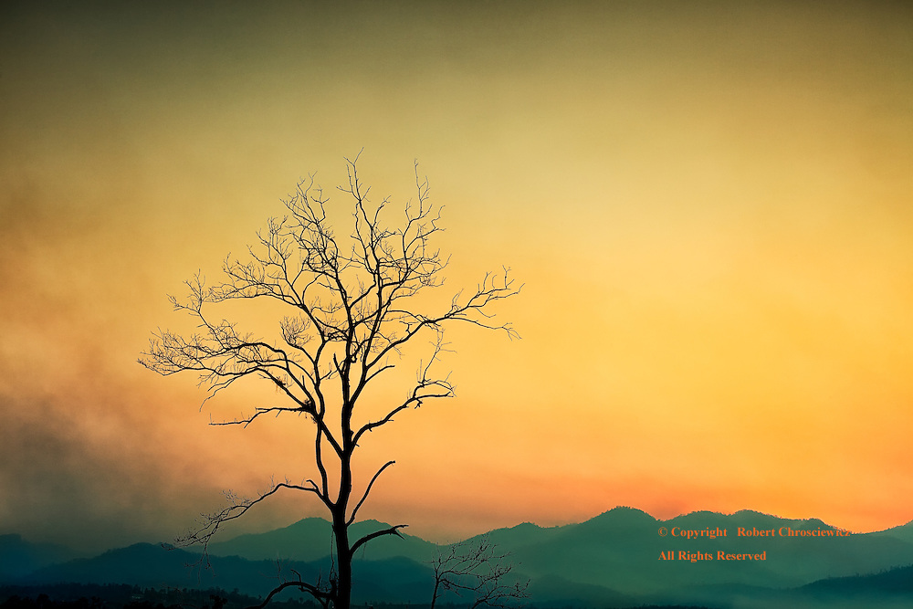 Barren Sunset: Smog fills the coloured sky and surround a lone barren tree, with the silhouetted mountains in the background, over Pai Thailand.