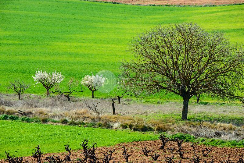 Campos agricolas.  Hontecillas. Cuenca ©ANTONIO REAL HURTADO / PILAR REVILLA