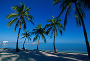 Palm Trees, Islamorada, The Florida Keys, USA<br />