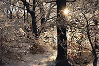 Winter sunset on trees covered in hoar-frost in Airdrie, Lanarkshire, Scotland