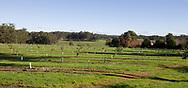 Oak Valley Truffle Farm Truffle in the south west of Western Australia near Mandjimup. Manjimup Truffles, Western Australia
