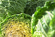 Selective focus close up of a few heads of Savoy Cabbage with one cut in half