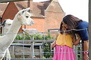 Isy Large and Charlotte, 6, feeding alpacas in the paddock at Hares Farm. CREDIT: Vanessa Berberian for The Wall Street Journal<br /> UKFARM-Hares Farm