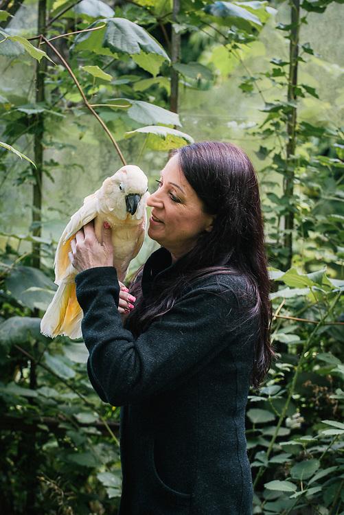 Peaches, a Moluccan Cockatoo