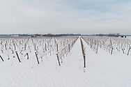 Bedell Cellars Winery, Snow,  Cutchogue, NY