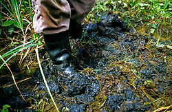 Oil sitting on the surface and just below the ground, contaminating the natural jungles