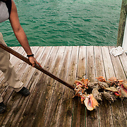 Conch are the national food of the Bahamas. Scientists are predicting a fishery collapse is imminent, but how best to protect them is heatedly debated.