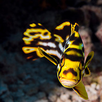 Favorite Underwater Photography