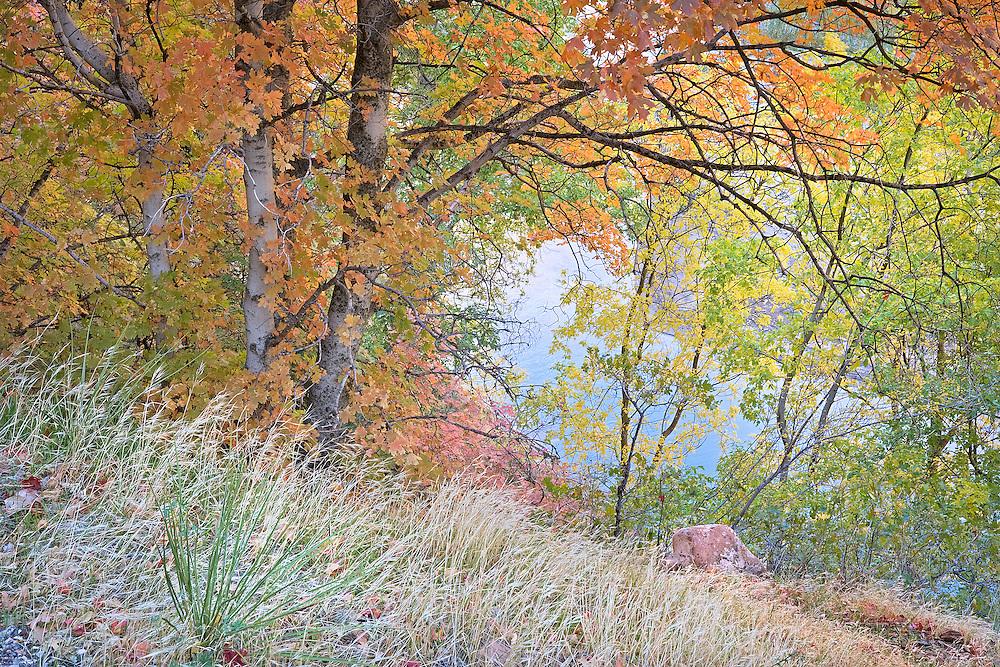 autumn colors along Virgin River Utah