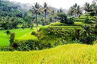 Bali, Karangasem, Amlapura. The road from Rendang to Amlapura passes through beautiful rice paddies and dense forests.